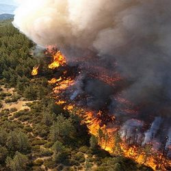 Пожары в лесах. Кто виноват?