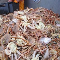 Помогут ли санкции против КНДР борьбе с ННН-промыслом краба и развитию рыбопереработки в России?