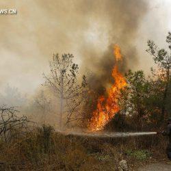 Ливан запросил у иностранных государств помощь для борьбы с лесными пожарами